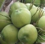 kelapa-muda
